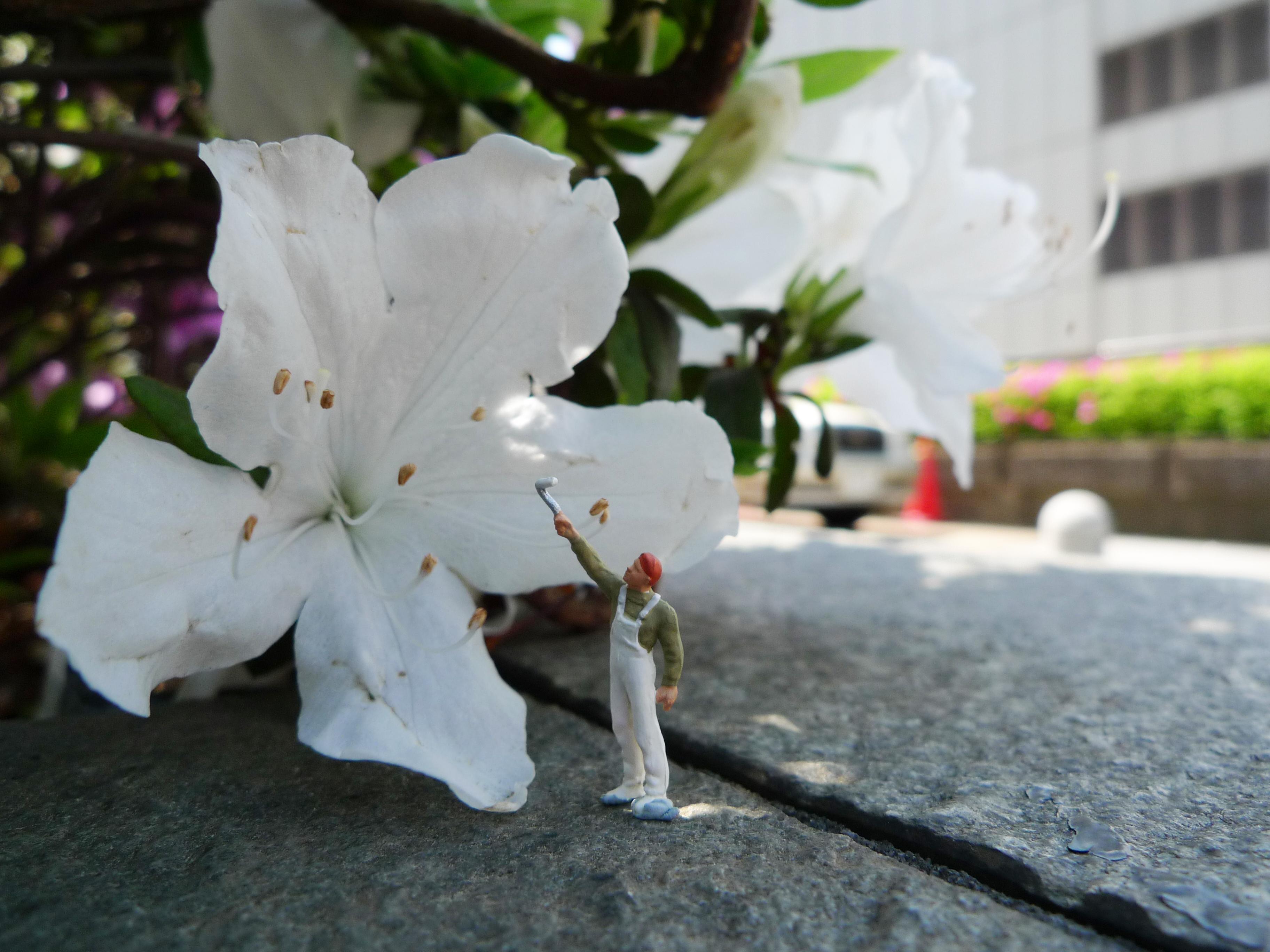 朱盈樺  即可拍, 2009 5.5 x 8.5 cm, 336張影像, 尺寸依場地而定